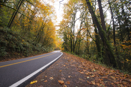 A winding road meandering through the picturesque autumn woods with yellowed overhanging trees on both sides of the road, forming a natural arch, and fallen leaves that turn side of the road in a real natural carpet. Stock Photo