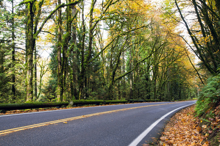 A turning road meandering through the picturesque autumn woods with yellowed overhanging trees on both sides of the road, forming a natural arch, and fallen leaves that turn side of the road in a real natural carpet. Stock Photo