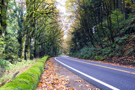 Winding road through the beautiful wild autumn forest with fallen leaves on the roadside, yellowed with moss-covered trees, young shoots, and large logs, officers guard the road from the mountain gorge.