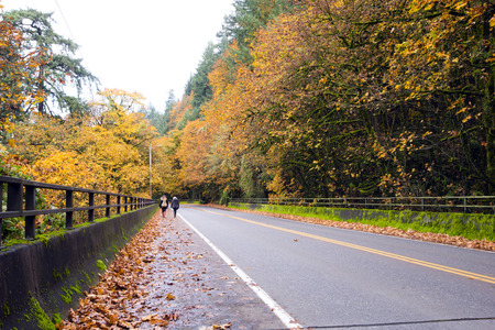 guardrails: Road in the autumn forest with yellowed foliage of trees on both sides of the bridge with guardrails and handrails, covered with green moss, fallen leaves on the roadside and two girls, walking and enjoying the beauty of autumn. Stock Photo