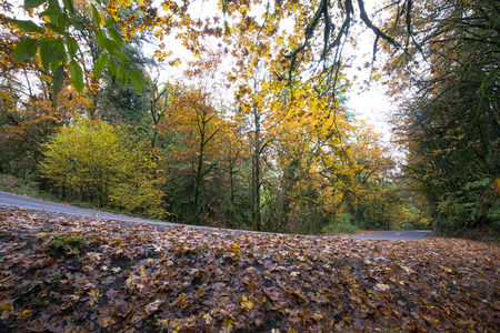 Landscape autumn forest with a winding road along the side of which lies a carpet of fallen leaves with autumn yellowed trees flanking the road with its beauty.
