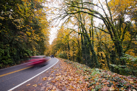 Winding road through the beautiful wild autumn forest with fallen leaves on the roadside, yellowed with moss-covered trees, trunks intricately entwined with thick ivy, with trees hanging over the road, with cars racing on it - a great place enjoying the w