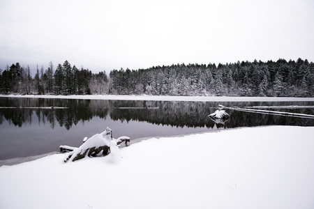 to attract: Clear winter landscape with a mirror surface of Lacamas Lake with a strip of wild forest on the shore and snow-covered old big stumps on the shore and in the water create a wonderful atmosphere of peace and quiet, truncating and stopping vanity Stock Photo