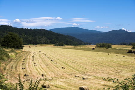 Summer field work on a beautiful meadow in Colombia Gorge with mown grass and hay harvested and pressed into rectangular bales scattered over the yellowed field by a tractor, with mountains overgrown with green trees Stock Photo