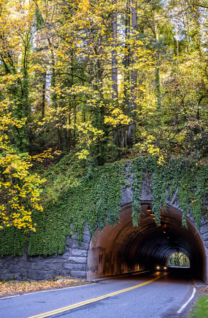 The entrance to the spherical tunnel through the rock is faced with granite and ivy-covered with autumn trees growing on the hill with yellowed leaves