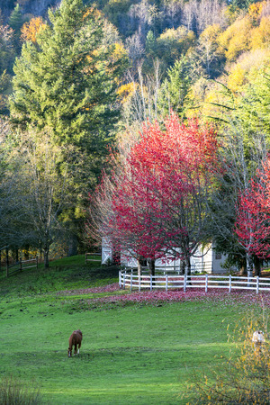 Fascinating autumn landscape with colorful trees, illuminated by the sun, around a large glade with a fence near the stable, with grazing horses - a real idyll to contemplate and enjoy life Imagens