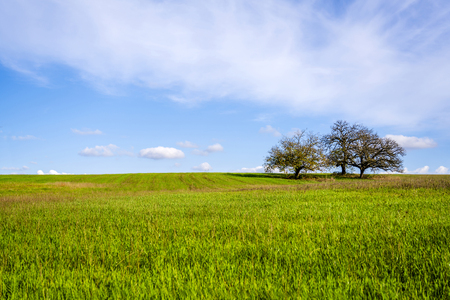 Smooth endless field with lush green grass and two lonely trees on the horizon against a cloudy sky