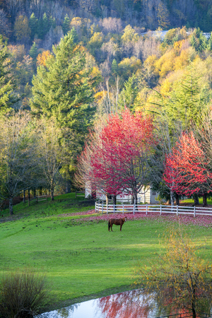 Fascinating autumn landscape of the estate with trees brightly colored in the fall, around a glade with pond, fence and stable and grazing horses - a real idyll for contemplating and enjoying life