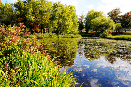 An old pond in the middle of an overgrown park with trees and bushes is reflected in the mirrored water with water lilies of a blue cloudy sky - a great corner of wildlife away from the metropolis