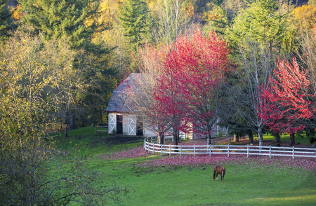 Fascinating autumn landscape of the estate with trees brightly colored in the fall, around a glade with fence and stable and grazing horses - a real idyll for contemplating and enjoying life