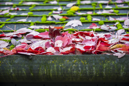 Fallen autumn leaves of red maple poured over the roof of the house and rain gutters preventing rainwater from moving along the gutters - the problem of the presence of tall trees in residential area