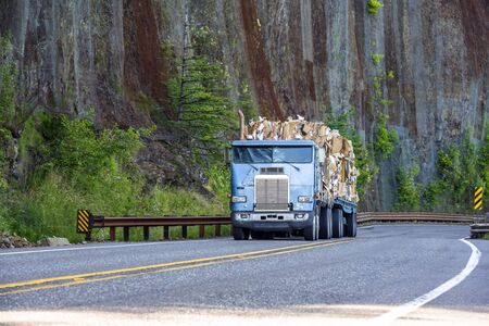 Old well working blue big rig cab-over semi truck transporting paper recycling on flat bed semi trailer driving on mountain winding road with rock wall and trees
