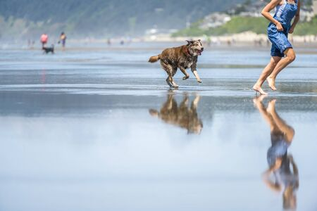 Young girl in denim overalls barefoot running with an old brown Labrador retriever dog along the mirror surface of water of Pacific Ocean in the Northwest enjoying fresh sea breeze Standard-Bild - 129030348