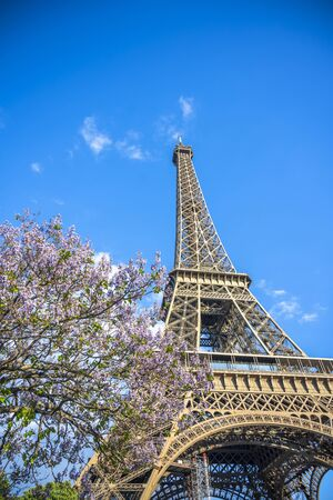 The unique iconic famous Eiffel Tower with spring flowering tree, as a symbol and main landmark of Paris and the French inventive genius in the historical past, attracts thousands of tourists