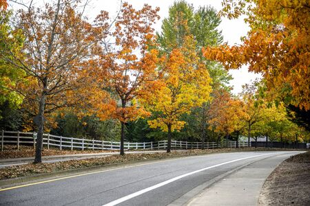 Picturesque autumn city landscape with trees with red and yellow leaves growing alley along the road with a dividing island and a decorative fence along the sidewalk Imagens