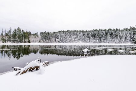 Winter Landscape with a mirror-like surface of Lacamas Lakes with old stumps sticking out of the water and a strip of forest powdered with snow on the shore with reflection of trees in calm water Archivio Fotografico