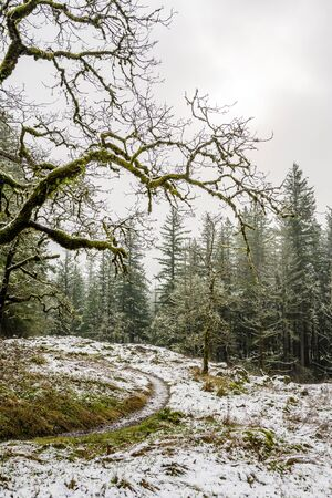 Winter landscape of wild forest with snow-covered and moss-covered trees and grass and footpath for leisure lifestyle tourists and people lovers of hiking surrounded by nature environment 版權商用圖片