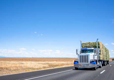 Powerful classic big rig American semi truck with chrome exhaust pipes transporting pressed into bales mown hay on flat bed semi trailer driving on the flat highway road with mowed meadow on side