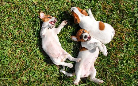 perrito: perritos lindos que juegan al aire libre