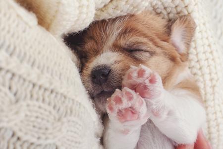 작은 강아지 강아지 코 감한 니트 스웨터에 달콤한 잠자는. 인간의 손에 애완 동물을 들고입니다. 동물 관리.