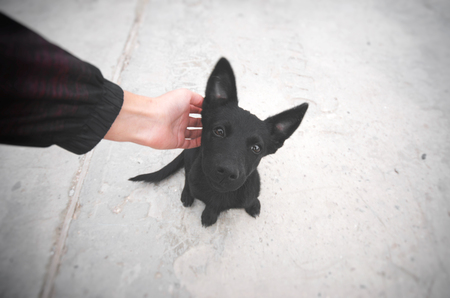 Small black puppy sitting on a road and looking at camera. Man scratching a dog. Pet and human friendship. Lost or homeless cur asking the man for help. Hungry animal asking for food. 版權商用圖片