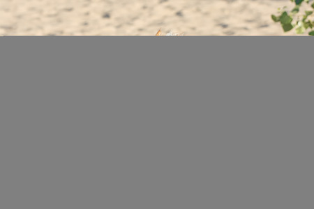 running nose: Funny dog running to the camera on the sandy beach. Happy pets meet their owners