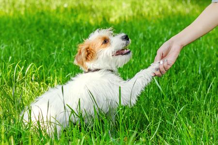 Frau schüttelt die Tatze zum Hund