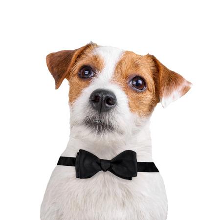 개가 백인에 고립 된 스톡 콘텐츠