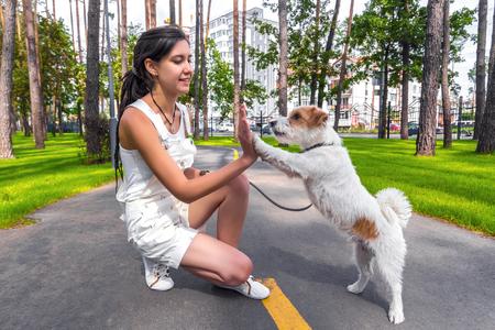 행복 한 젊은 여자 여름 공원에서 야외 개가 함께 trainnig합니까. 개는 소유자에게 높은 5를 제공합니다.