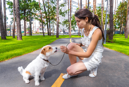 Young woman owner talk to her naughty dog. Pet showing tongue to human.