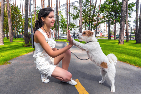 Happy young woman do trainnig with dog outdoors in a summer park. Dog give a high five to owner. 版權商用圖片