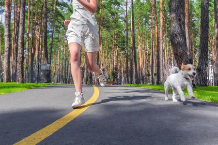 강아지와 인간 여름 공원에서 트랙에서 실행합니다. 애완 동물과 함께하는 스포츠 훈련. 스톡 콘텐츠