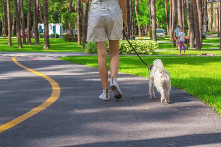 젊은 여자와 파슨 러셀 테리어 강아지 공원에서 산책 스톡 콘텐츠