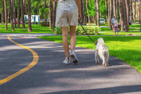 Young woman and Parson Russell Terrier dog walking in a park