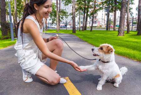 Young Woman and Dog Shaking Hands at Summer Park Alley. Human and Pets Best Friends Concept 版權商用圖片