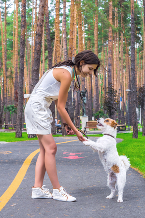 Young woman trainnig white dog in a park Stock Photo