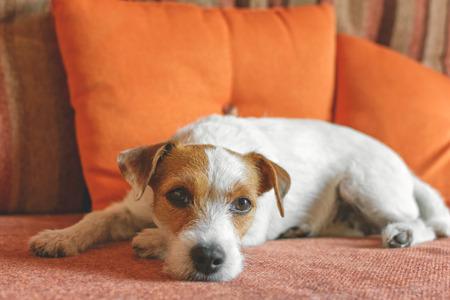 집에서 소파에 누워있는 동안 주인을 기다리는 슬픈 개
