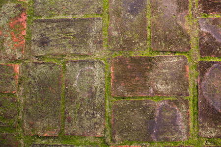damp: texture of mos on damp brick wall for background (Part of the historic site in  Ayutthaya,Thailand)
