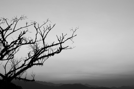 br: Dead tree branch, black and white Stock Photo
