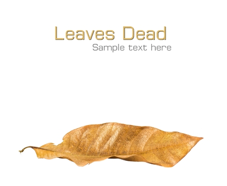 dead leaf: Dead leaf on white isolated background