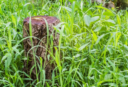 cut grass: Tree stump on a green grass . Tree are being cut . Cut tree is deforestation.