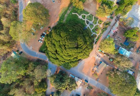Giant Monkey Pod Tree (Aerial photo), Tha Muang,kanchanaburi,Thailand. Is a tree that is over 100 years old with an average radius of 25.87 meters, shade diameter of about 51.75 metersCanopy height of 20 meters with the area of the shrub about 1 rai 2 ngan 4 wa.