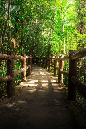 Sidewalk paths in National parks in Thailand. 写真素材