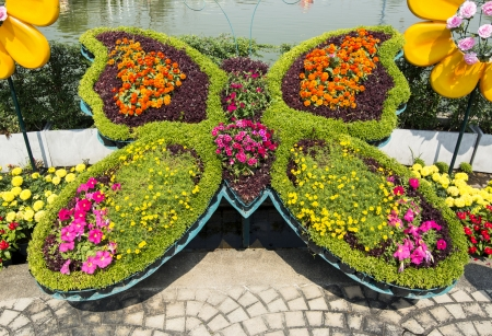 Bunch of colorful flowers in butterfly shape photo