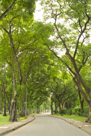 Green alley,path in the park Stock Photo - 14372849