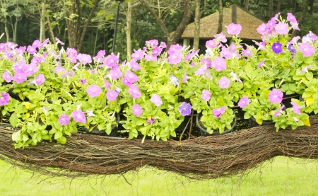 Flower Basket photo