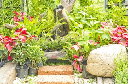 watergarden: garden pots and summer flowers