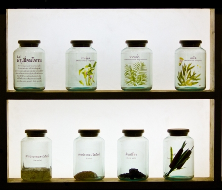 Tissue of plants in glass bottles in the science laboratory  photo