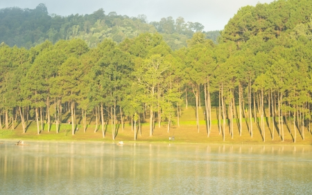 Sunny pine forest in early morning  photo