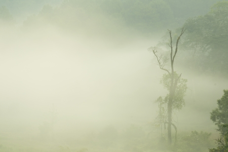 morning fog in dense tropical rainforest photo
